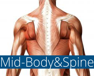 mid-body and spine