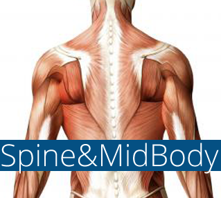 Spine-Mid-Body