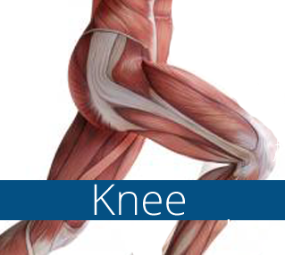 Trigenics knee course plus clinic growth marketing coaching elite